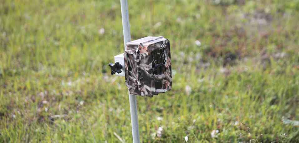 How Do Trail Cameras Work