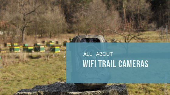 All About WiFi Trail Cameras