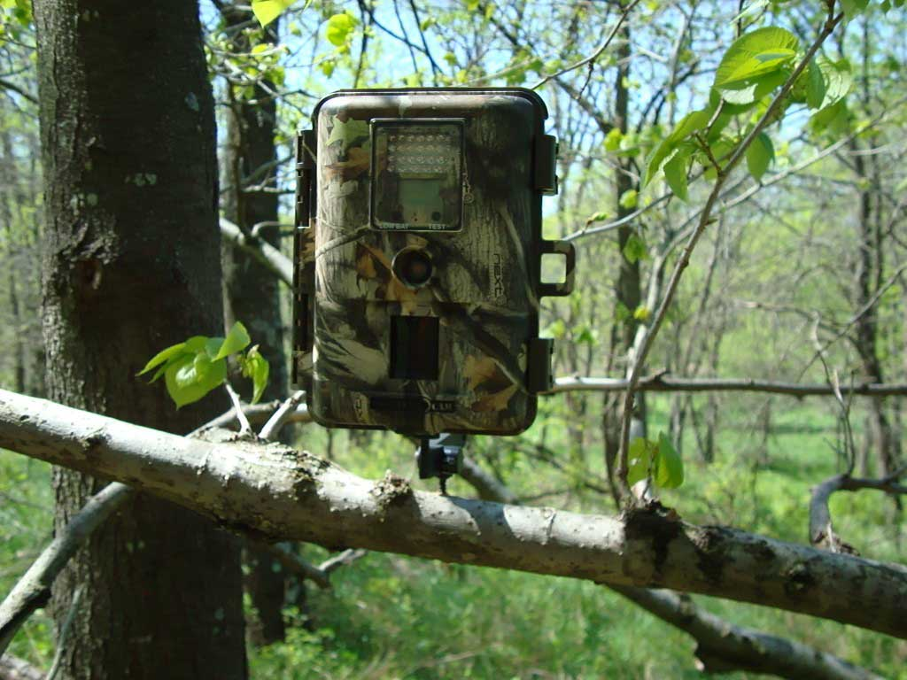 Types of Trail Cameras