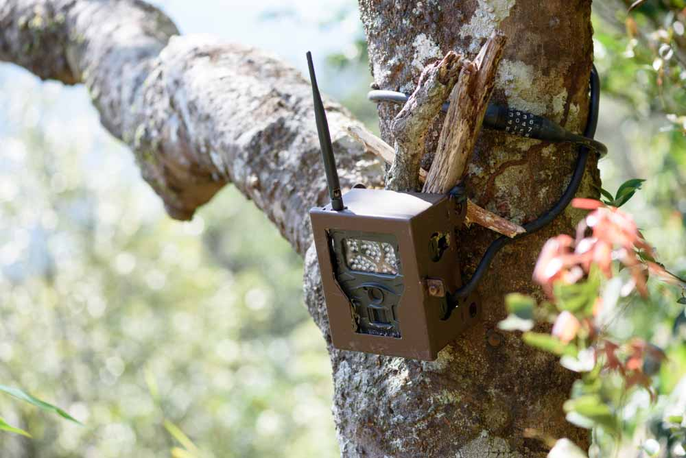 Tasco trail camera review