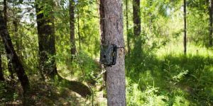 Why Do You Buy a Trail Camera