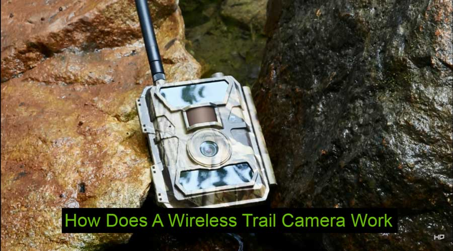 How Does A Wireless Trail Camera Work